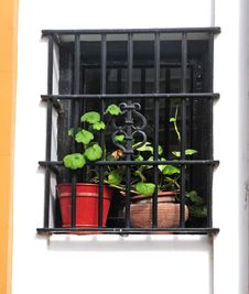 Free Flowers In The Window Stock Photo - 4633760