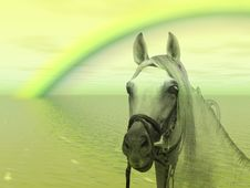 Free Horse In The Rainbow Royalty Free Stock Photography - 4634447