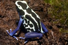 Free Exotic Frog Stock Photos - 4634693