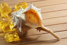 Free Seashell Royalty Free Stock Image - 4635216