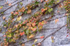 Free Autumn Leaf Stock Photography - 4636532