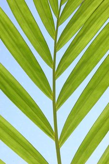Free Palm Branch Royalty Free Stock Images - 4636979