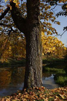 Free Tree Stock Photos - 4637913