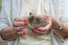 Free Bird Nest Stock Photography - 4638512