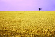Free Yellow Field With Fantasy Sky Stock Photo - 4638570