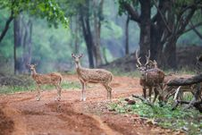 Free Spotted Deer Family With Habitat. Stock Images - 46334084