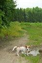 Free Puppy Stock Photo - 4640550