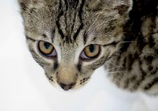 Cat Looking From Below Royalty Free Stock Photo