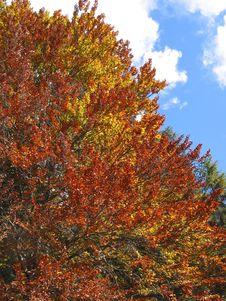 Free Tree In Tirol, Austria Royalty Free Stock Image - 4642176
