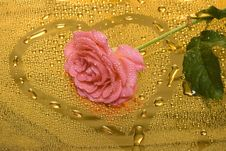 Free Pink Rose With Water Drops Stock Photo - 4642640