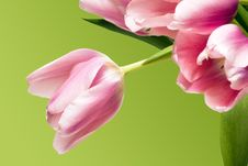 Free Pink Tulips Over Green Royalty Free Stock Photos - 4642828