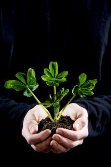 Free Holding Small Plant Stock Image - 4643031