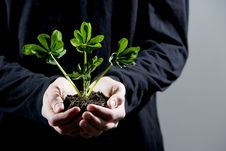 Free Holding Small Plant Stock Photography - 4643052