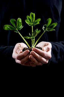Free Holding Small Plant Stock Photography - 4643072