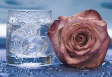 Free Glass With Water And Rose Stock Photos - 4643453