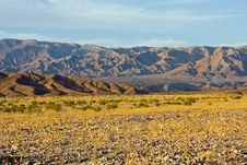 Free Desert Wildflowers In Death Valley-MAR1308_3708 Royalty Free Stock Image - 4643966