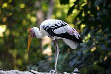 Free Bird Stock Image - 4644181