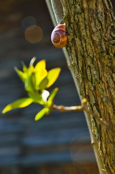 Free Snail Stock Images - 4646714