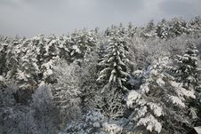 Free Winter At The Woods Stock Image - 4647481