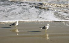 Two Gulls In Surf Stock Image