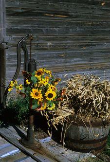 Free Flower Pump Royalty Free Stock Image - 4648106