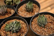 Free Cactus Stock Images - 4648174