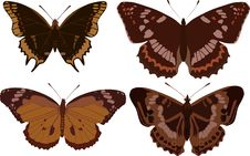 Free Four Dark Butterflies Royalty Free Stock Photography - 4648277