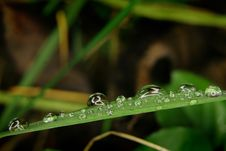 Free Tiny Drops On The Grass Leaf Royalty Free Stock Photography - 4648287