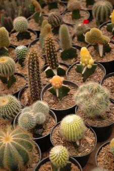 Free Cactus Stock Images - 4648294