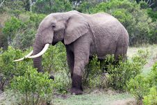Free Elephant In The Reserve Stock Photos - 4648333