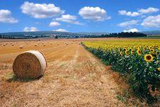 Free Harvest Royalty Free Stock Photo - 4648365