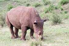 Free White Rhino Stock Images - 4648474