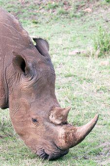 Free White Rhino Stock Photo - 4648510