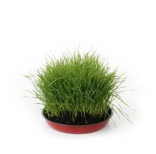Free Green Fresh Grass Stock Photos - 4649473