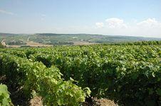 Free Vineyards Royalty Free Stock Image - 4649586
