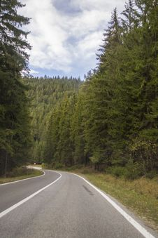 Free Forest Road Stock Photography - 46436092