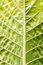 Free Leaf Closeup Stock Photos - 4655223
