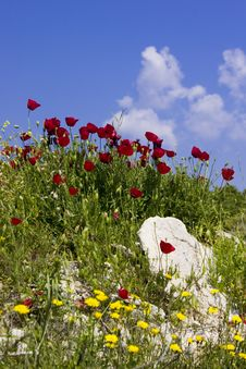 Free Spring Wild Flowers Royalty Free Stock Photo - 4650835