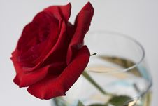 Free Red Rose Royalty Free Stock Photos - 4651698