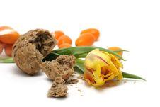 Tulip, Bread And Kumquats Royalty Free Stock Image