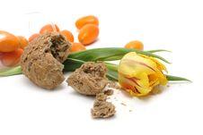 Free Tulip, Bread And Kumquats Stock Image - 4651731