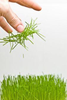 Free Grass Stock Photos - 4652163