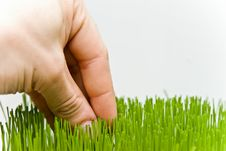 Free Grass Stock Photos - 4652173