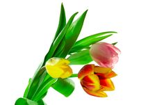 Free Bunch Of Three Tulips Royalty Free Stock Photos - 4652548