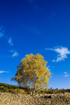 Free Lone Tree On The Grassy Horizon Royalty Free Stock Image - 4653956