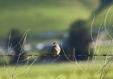 Free Little Bird On Wire Stock Images - 4654104