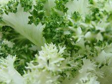 Free Cabbage Macro Shoot Stock Image - 4654441