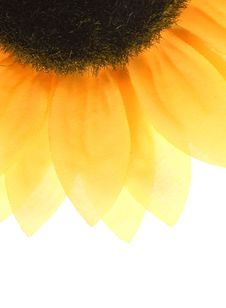 Free Sunflower Royalty Free Stock Images - 4655079