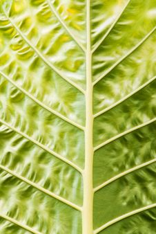 Free Leaf Closeup Stock Photos - 4655223