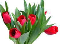 Free Red Spring Tulips Stock Photography - 4656332